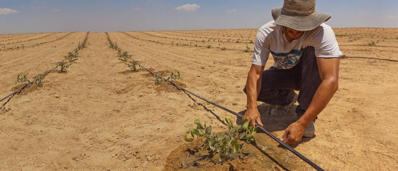L irrigazione di precisione va oltre l irrigazione a for Netafim irrigazione
